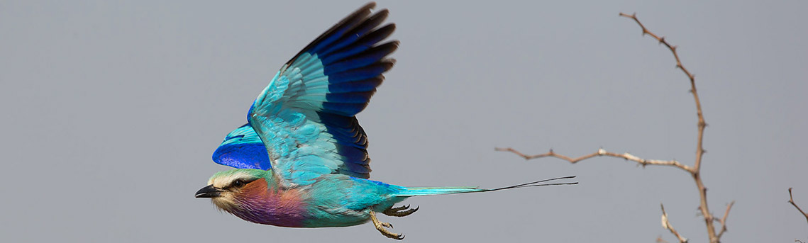 Birding Safaris Zimbabwe